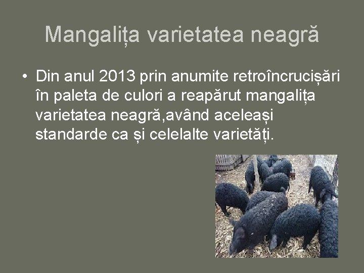 Mangalița varietatea neagră • Din anul 2013 prin anumite retroîncrucișări în paleta de culori