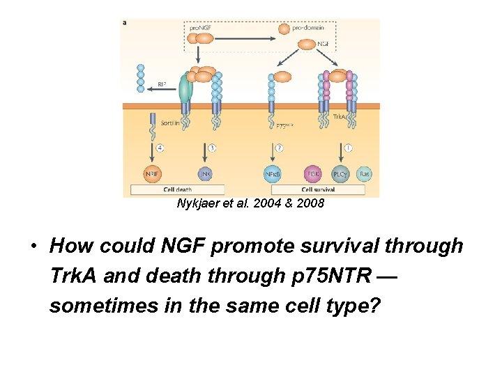Nykjaer et al. 2004 & 2008 • How could NGF promote survival through Trk.