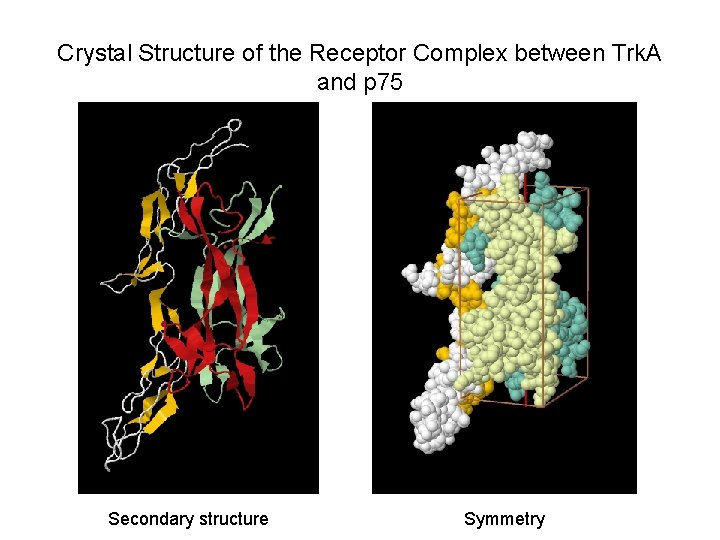 Crystal Structure of the Receptor Complex between Trk. A and p 75 Secondary structure