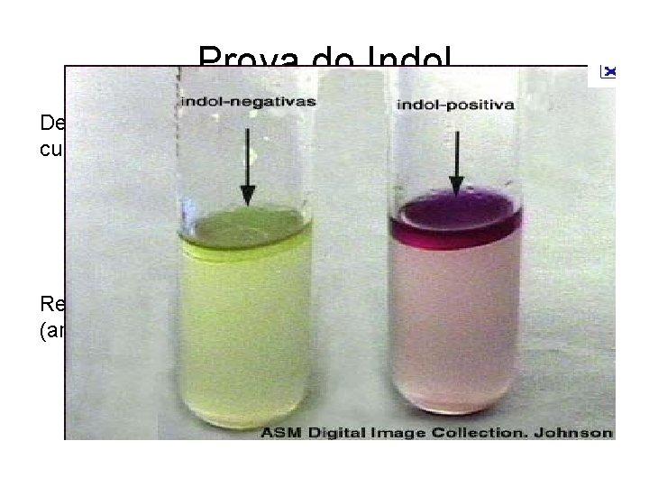 Prova do Indol Detecta a produção de indol pela bactéria em meio de cultivo