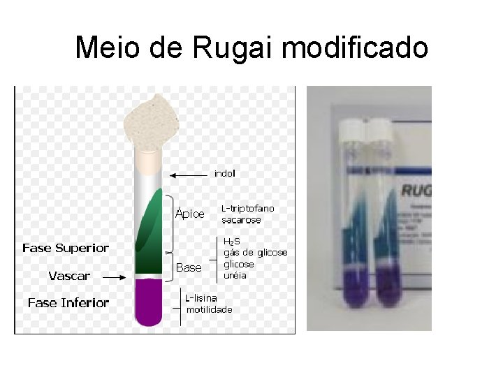 Meio de Rugai modificado