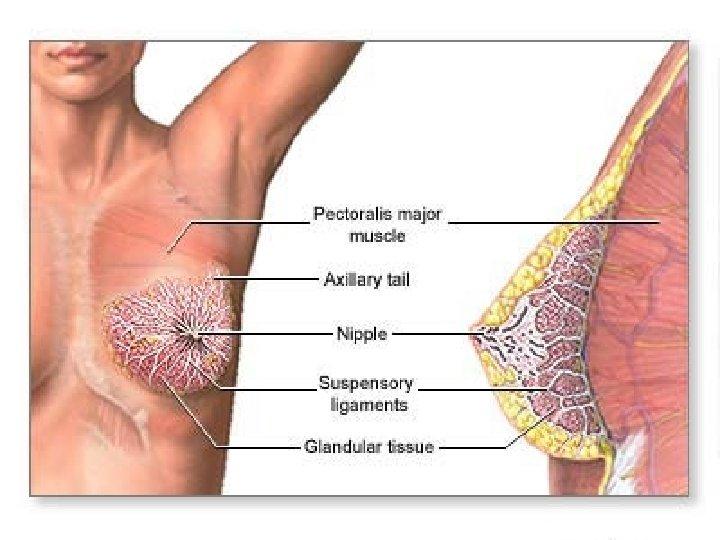 Stadiile cancerului mamar
