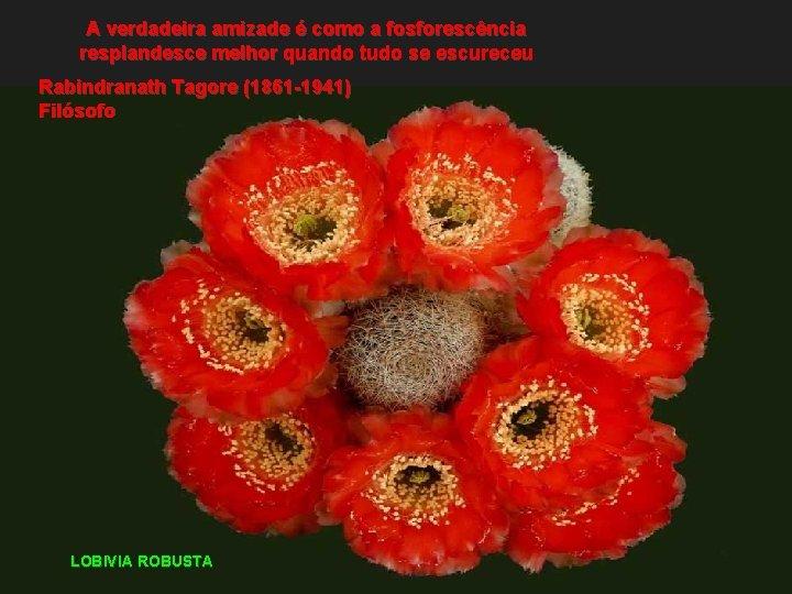 A verdadeira amizade é como a fosforescência resplandesce melhor quando tudo se escureceu Rabindranath