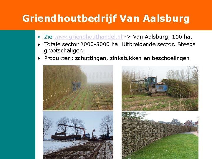 Griendhoutbedrijf Van Aalsburg • Zie www. griendhouthandel. nl -> Van Aalsburg, 100 ha. •