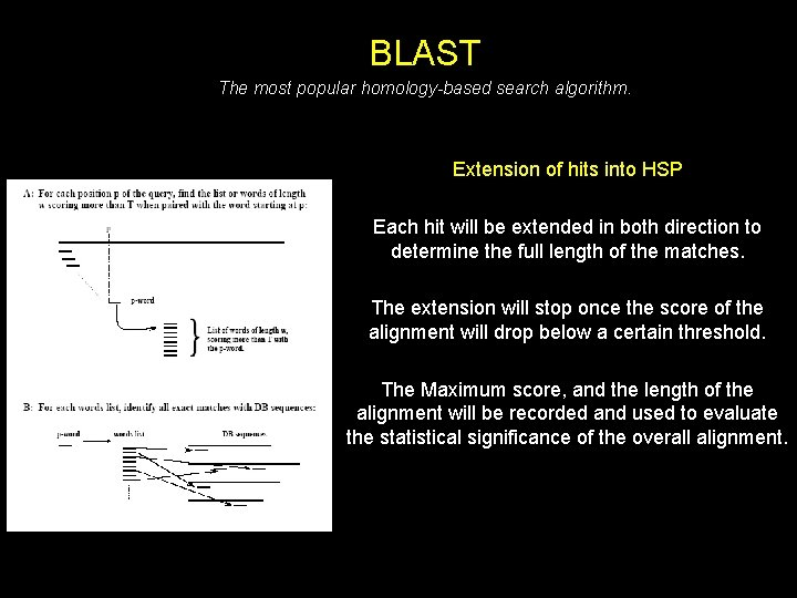 BLAST The most popular homology-based search algorithm. Extension of hits into HSP Each hit