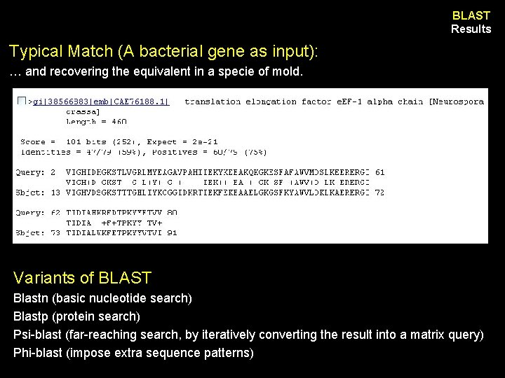 BLAST Results Typical Match (A bacterial gene as input): … and recovering the equivalent