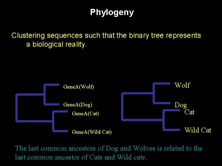 Phylogeny Clustering sequences such that the binary tree represents a biological reality. Gene. A(Wolf)