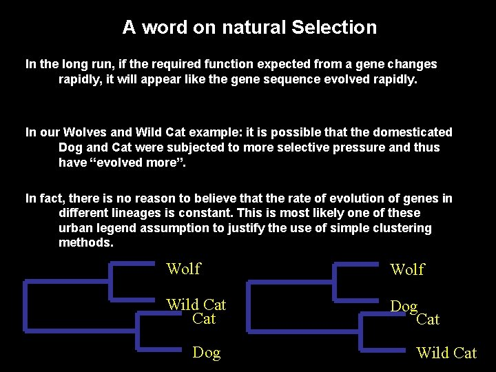 A word on natural Selection In the long run, if the required function expected