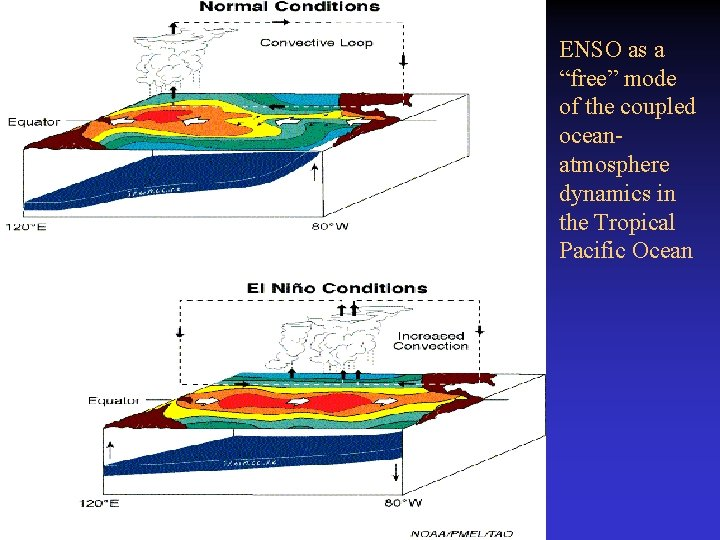 """ENSO as a """"free"""" mode of the coupled oceanatmosphere dynamics in the Tropical Pacific"""