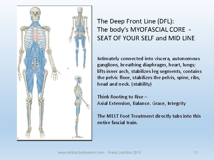 The Deep Front Line (DFL): The body's MYOFASCIAL CORE SEAT OF YOUR SELF and