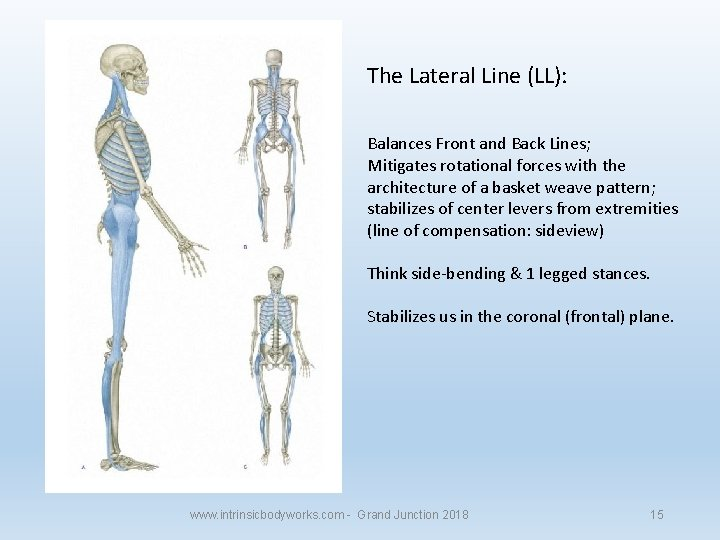 The Lateral Line (LL): Balances Front and Back Lines; Mitigates rotational forces with the
