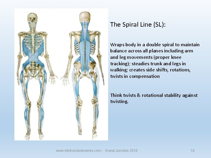 The Spiral Line (SL): Wraps body in a double spiral to maintain balance across