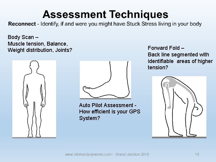 Body Scan – Muscle tension, Balance, Weight distribution, Joints? Forward Fold – Back line