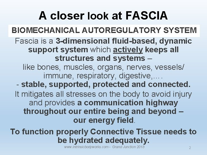 A closer look at FASCIA BIOMECHANICAL AUTOREGULATORY SYSTEM Fascia is a 3 -dimensional fluid-based,
