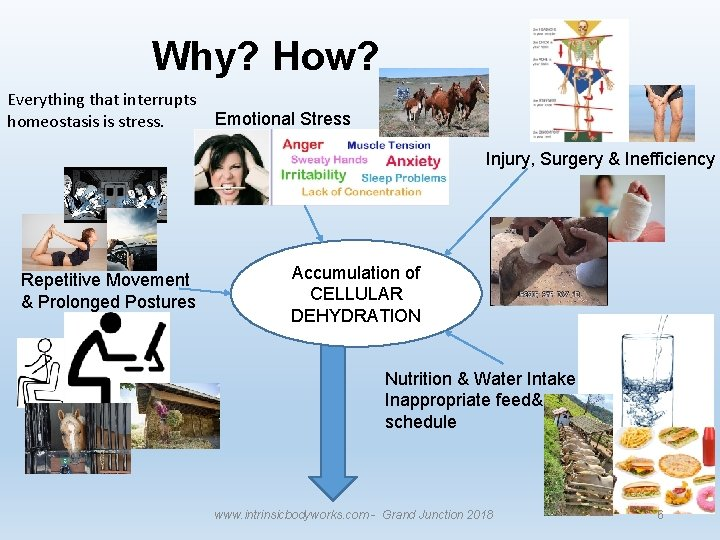 Why? How? Everything that interrupts homeostasis is stress. Emotional Stress Injury, Surgery & Inefficiency