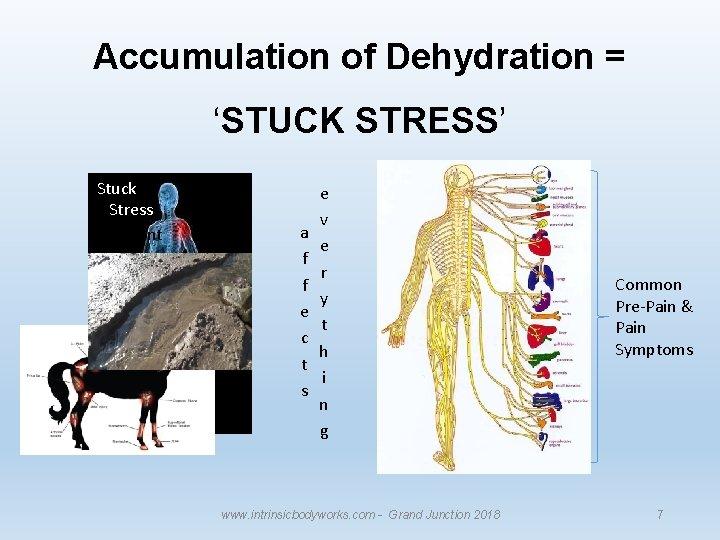 Accumulation of Dehydration = 'STUCK STRESS' Stuck Stress Sediment a f f e c
