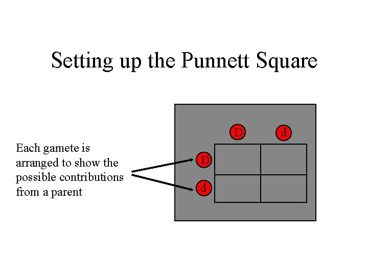Setting up the Punnett Square D Each gamete is arranged to show the possible
