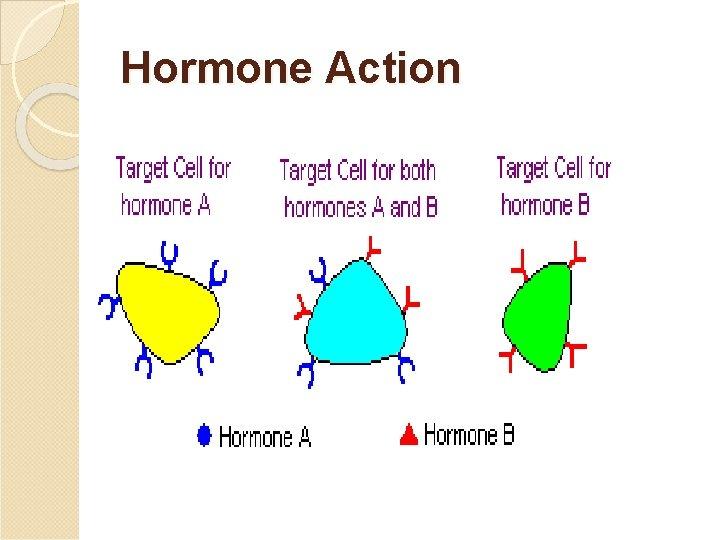 Hormone Action
