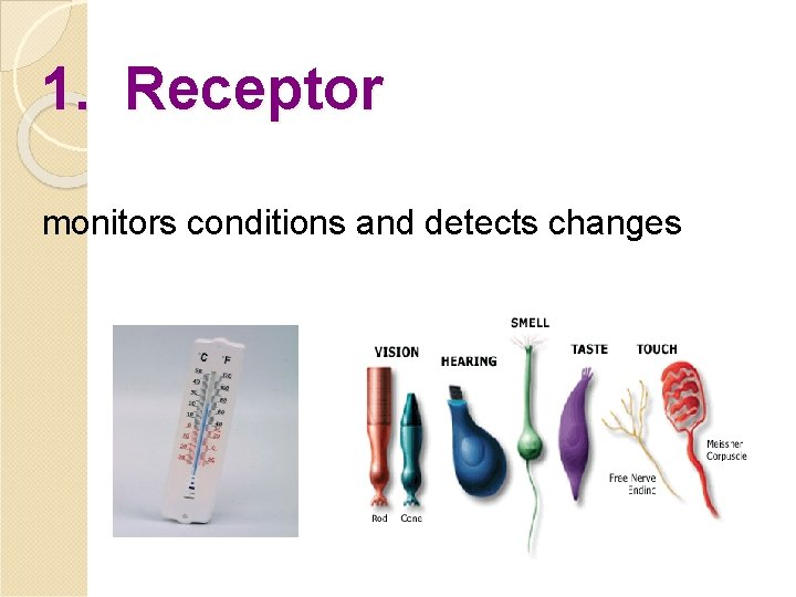 1. Receptor monitors conditions and detects changes
