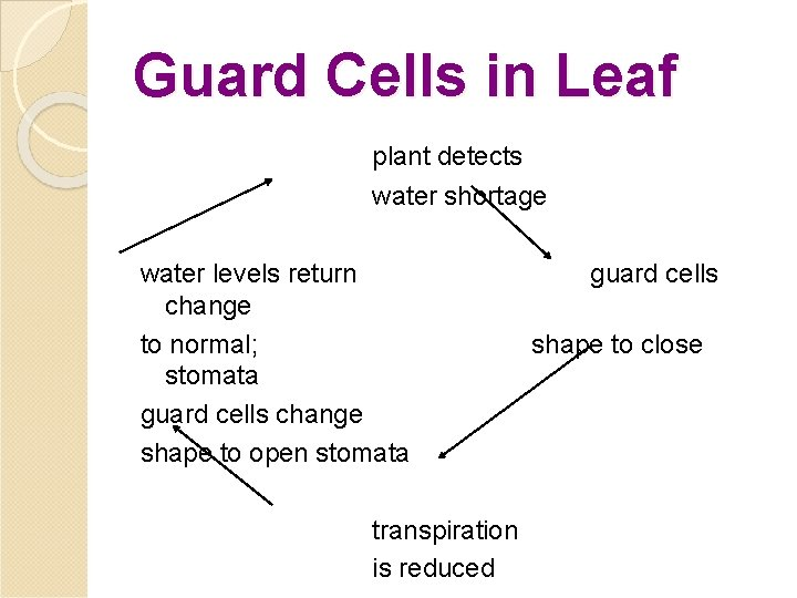 Guard Cells in Leaf plant detects water shortage water levels return change to normal;