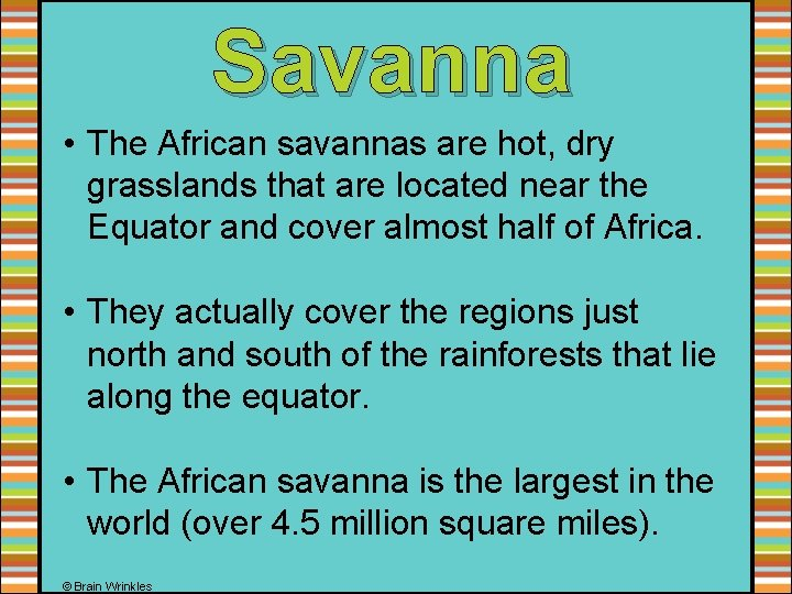 Savanna • The African savannas are hot, dry grasslands that are located near the