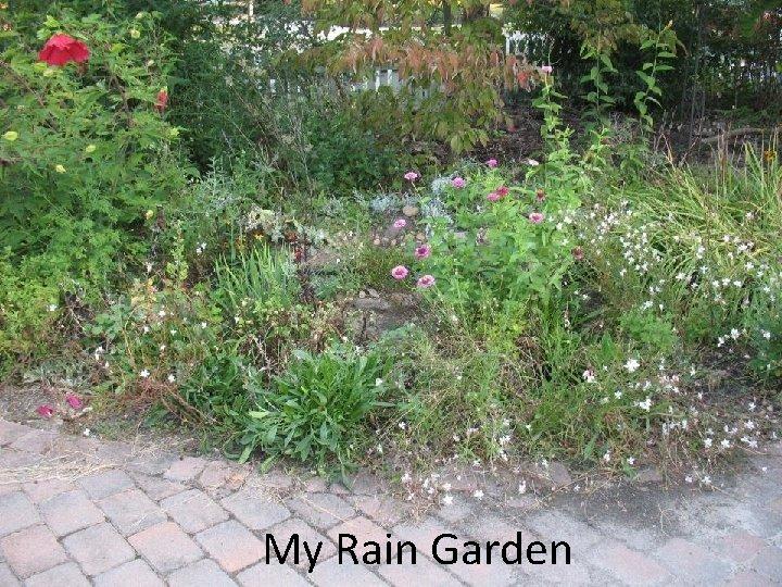 My Rain Garden