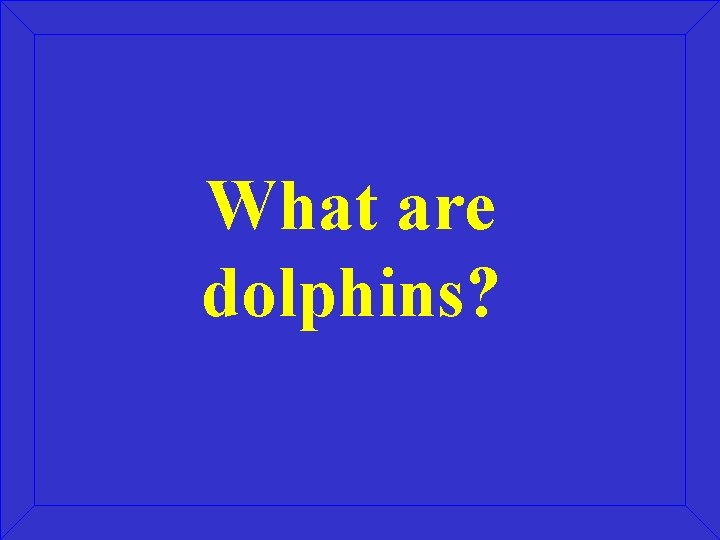 What are dolphins?