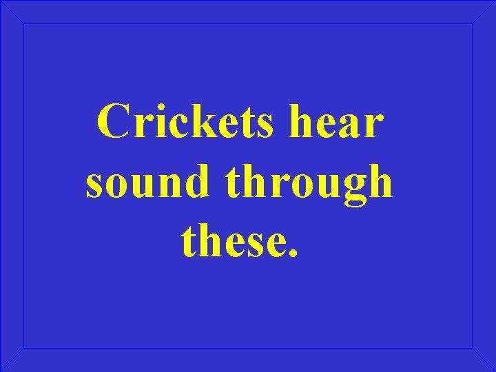 Crickets hear sound through these.