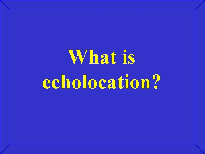What is echolocation?