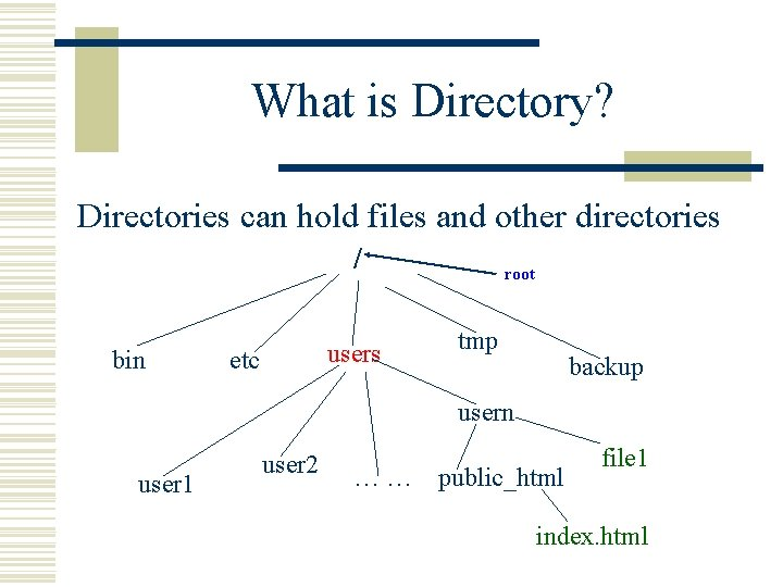 What is Directory? Directories can hold files and other directories / bin users etc