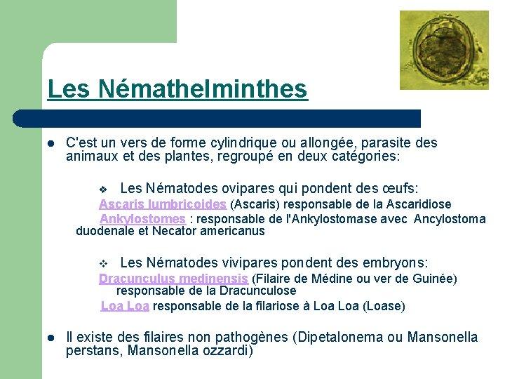 les nemathelminthes)