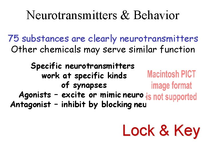 Neurotransmitters & Behavior 75 substances are clearly neurotransmitters Other chemicals may serve similar function