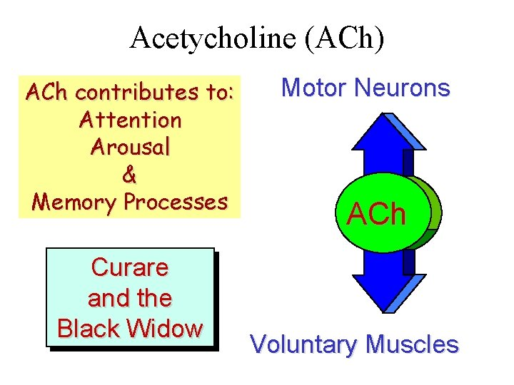 Acetycholine (ACh) ACh contributes to: Attention Arousal & Memory Processes Curare and the Black