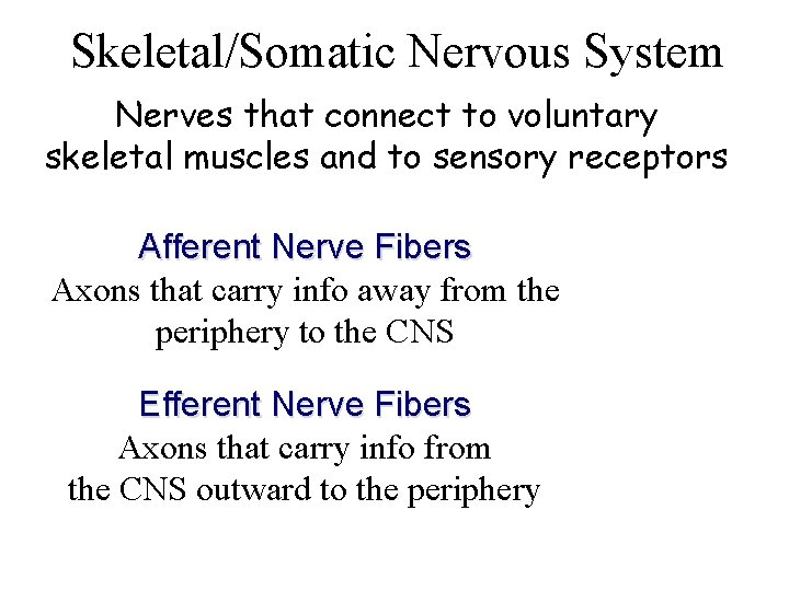 Skeletal/Somatic Nervous System Nerves that connect to voluntary skeletal muscles and to sensory receptors