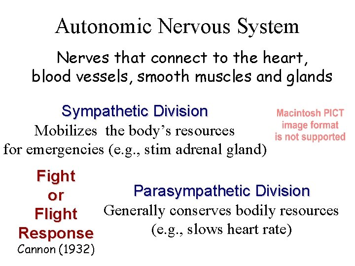 Autonomic Nervous System Nerves that connect to the heart, blood vessels, smooth muscles and