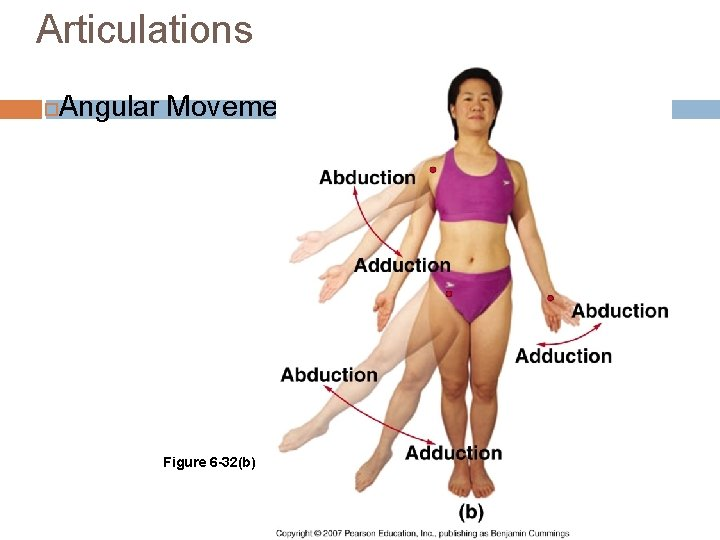 Articulations Angular Movements Figure 6 -32(b)
