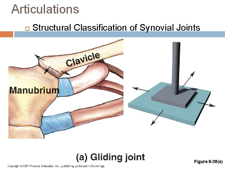 Articulations Structural Classification of Synovial Joints Figure 6 -35(a)