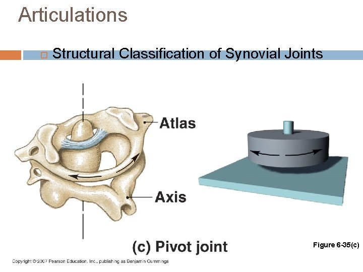 Articulations Structural Classification of Synovial Joints Figure 6 -35(c)