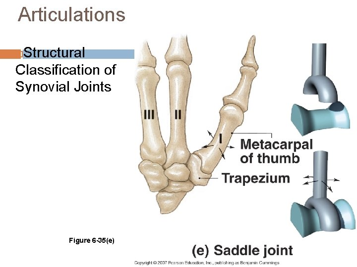 Articulations Structural Classification of Synovial Joints Figure 6 -35(e)