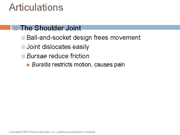 Articulations The Shoulder Joint Ball-and-socket design frees movement Joint dislocates easily Bursae reduce friction