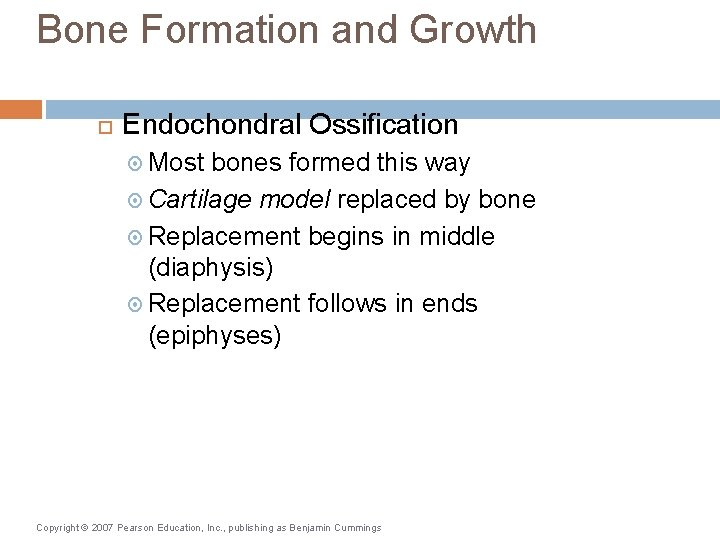 Bone Formation and Growth Endochondral Ossification Most bones formed this way Cartilage model replaced