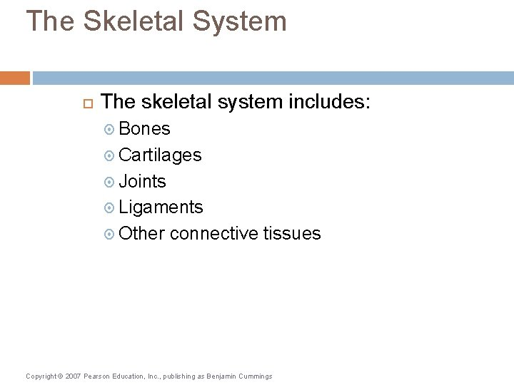 The Skeletal System The skeletal system includes: Bones Cartilages Joints Ligaments Other connective tissues