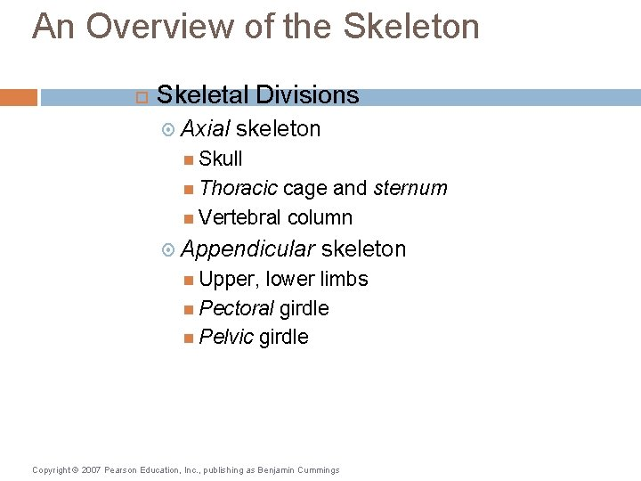 An Overview of the Skeleton Skeletal Divisions Axial skeleton Skull Thoracic cage and sternum