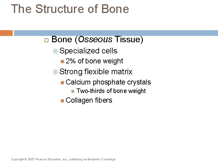 The Structure of Bone (Osseous Tissue) Specialized 2% of bone weight Strong flexible matrix