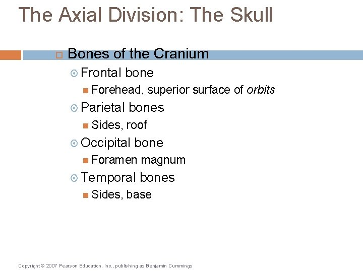 The Axial Division: The Skull Bones of the Cranium Frontal bone Forehead, Parietal Sides,