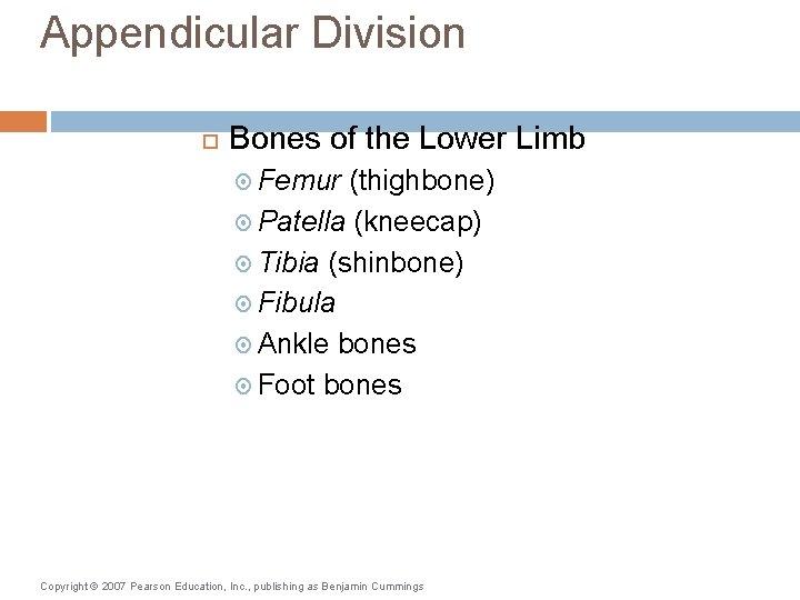 Appendicular Division Bones of the Lower Limb Femur (thighbone) Patella (kneecap) Tibia (shinbone) Fibula