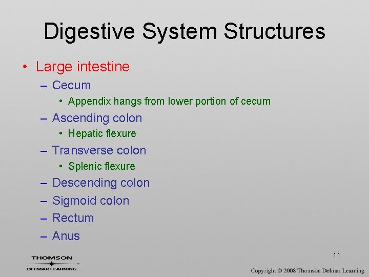 Digestive System Structures • Large intestine – Cecum • Appendix hangs from lower portion