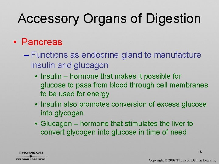 Accessory Organs of Digestion • Pancreas – Functions as endocrine gland to manufacture insulin