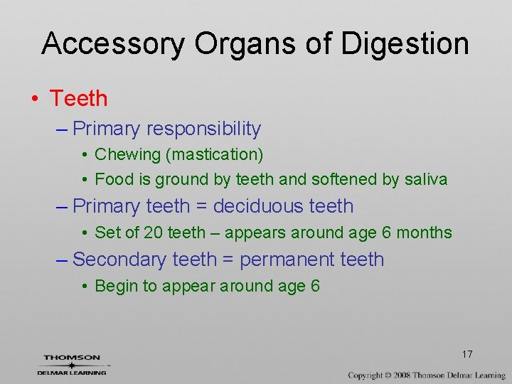 Accessory Organs of Digestion • Teeth – Primary responsibility • Chewing (mastication) • Food