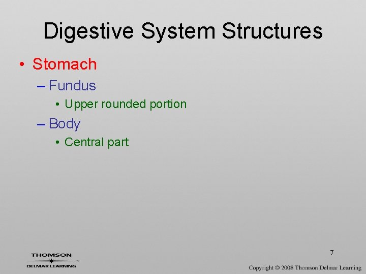 Digestive System Structures • Stomach – Fundus • Upper rounded portion – Body •